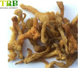 Organic Solomonseal Rhizome Extract 10.0% Polysaccharides
