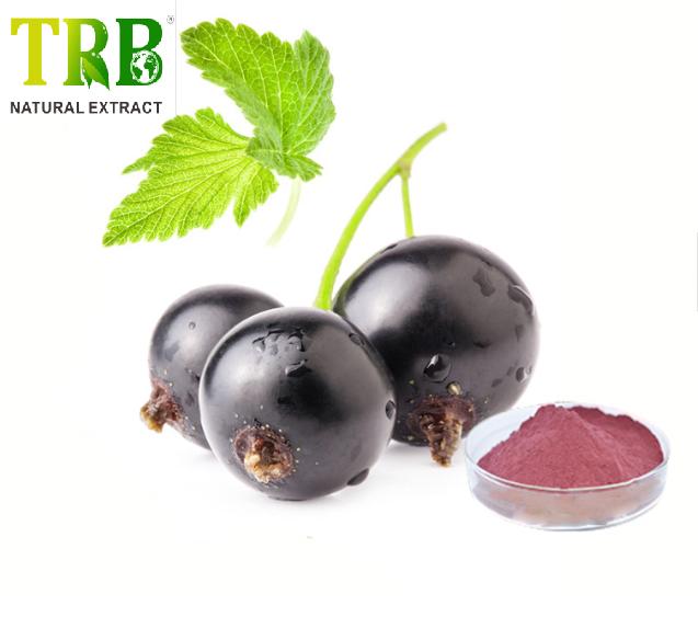 Black currant Juice Powder Featured Image