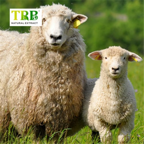 ZellV-Power-Ingredients-Sheep