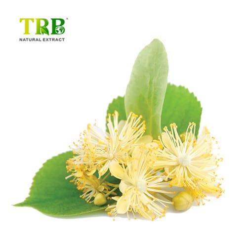 Linden Extract / Tilia Extract/Tilia Cordata Mill Extract Featured Image
