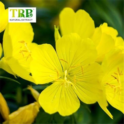 493ss_thinkstock_rf_evening_primrose_flowers
