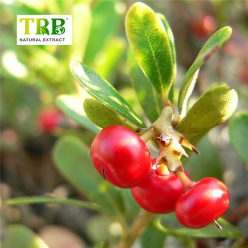 Original Factory Dihydromyricetin Extract - High Quality 100% Natural Bearberry Extract,Bearberry Skin Lightening,Bearberry Leaf Extract Powder – Tong Rui Bio