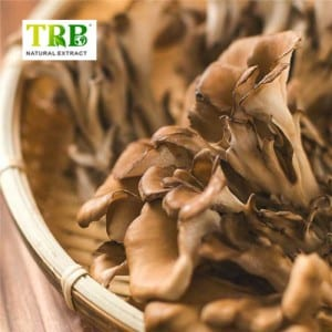 Maitake Mushroom Extract/Grifola Frondosa extract