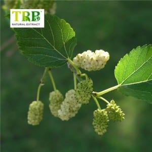 Online Exporter Royal Jelly Powder Benefits - Mulberry Leaf Extract 1-DNJ/1-Deoxynojirimycin – Tong Rui Bio