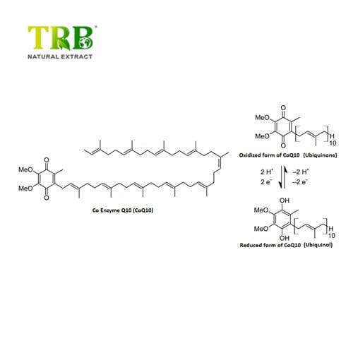 Ubidecarenone Coenzyme Q10 Featured Image