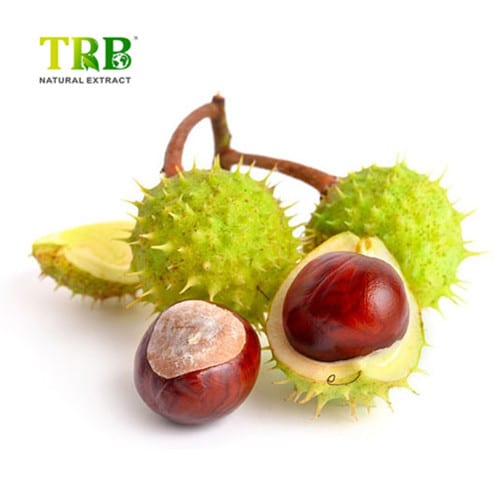 Wholesale Dealers of Coleus Forskohlii Root Extract Powder - Horse Chestnut Extract – Tong Rui Bio
