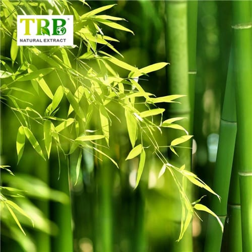 Bamboo Extract Featured Image