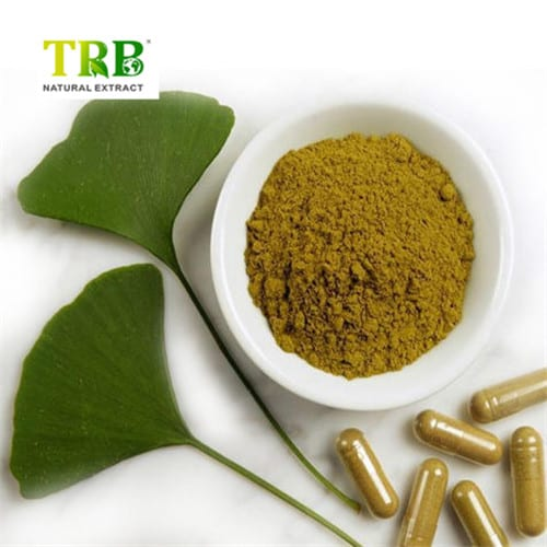 Ginkgo Biloba Extract Featured Image