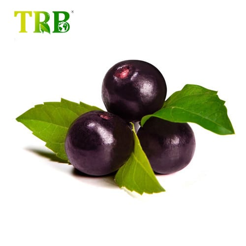 Factory Cheap Hot Epilobium Extract - Acai Berry Extract – Tong Rui Bio Featured Image
