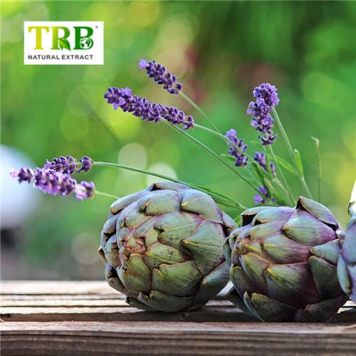 Special Price for Nettle Extract Benefits - Low MOQ for Artichoke Extract Cynarine/artichoke Plant Extracts/artichoke Leaf Extract Powder – Tong Rui Bio