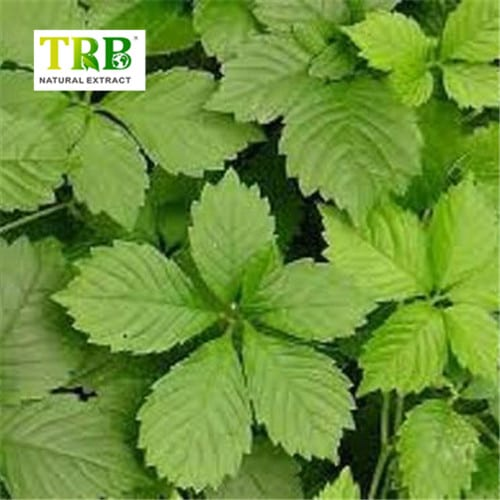 China wholesale Horse Chestnut Extract Aescin - ODM Factory Herb Triterpene Glycosides Black Cohosh Extract – Tong Rui Bio