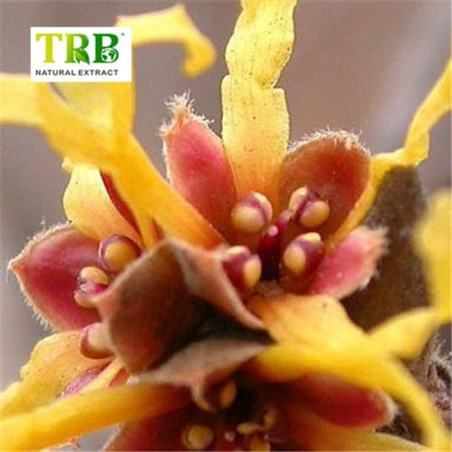 Reasonable price for Celery Seed And Olive Leaf Extract - Hamamelis Extract – Tong Rui Bio Featured Image