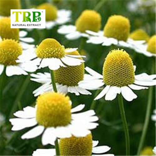 wholesale chamomile extract manufacturers and suppliers