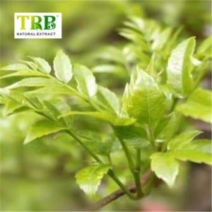 Vine Tea Extract Dihydromyricetin 98%