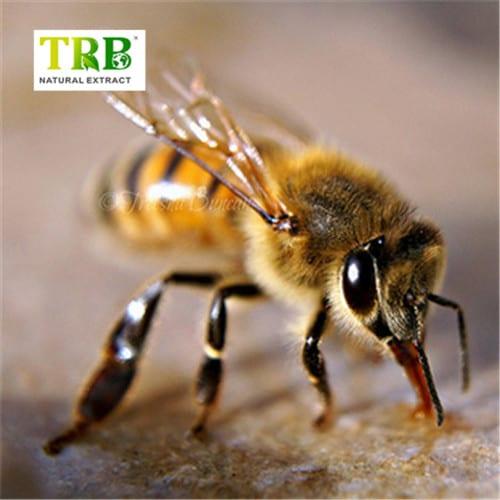 Bee Venom Featured Image
