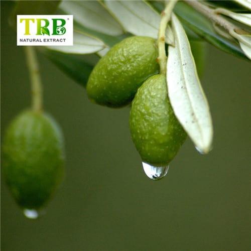 Olive-Leaf-Extrac