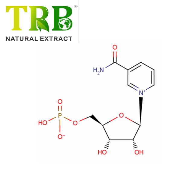Nicotinamide mononucleotide/NMN Featured Image