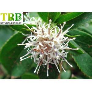 Organic Aractylodes Extract 10:1