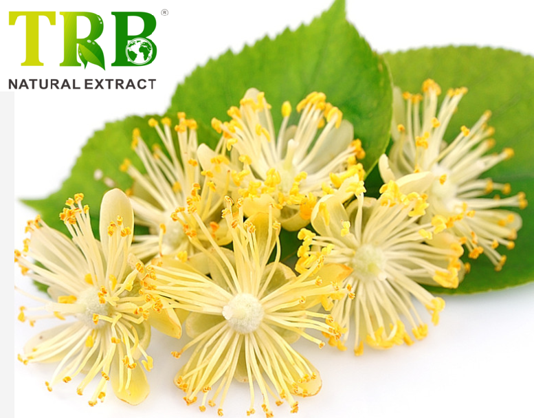 Linden Extract Featured Image