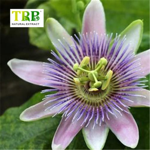 passion-flower-extract-500x500