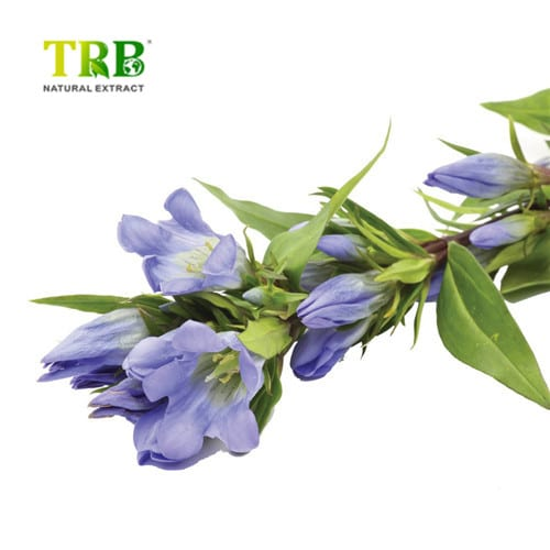 product_Gentian