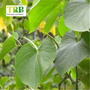 Quality Inspection for China Kavalactones 30% Kava Root P. E. Kava Root Extract