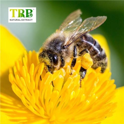 Bee Pollen Featured Image