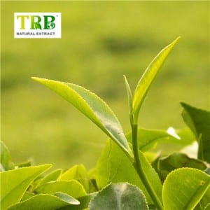Green Tea atera