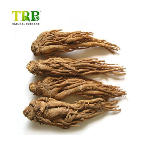 Personlized Products Gotu Kola Standardized Extract - Angelica Sinensis Extract – Tong Rui Bio