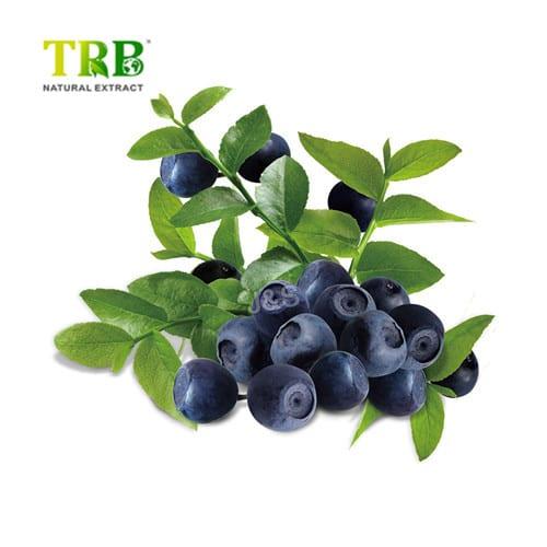 Factory wholesale Oleoylethanolamide (Oea) Supplements - Billberry Extract – Tong Rui Bio