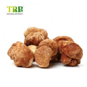 Lion's Mane Mushroom Extract