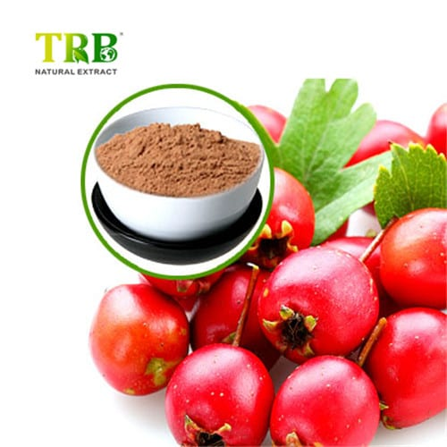 hawthorn-berry-extract-500x500