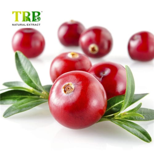 Cranberry Extract Featured Image