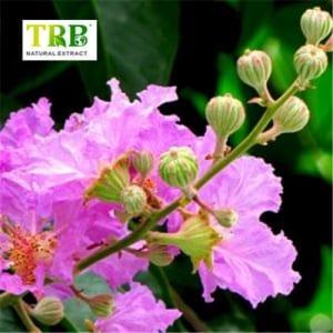 Factory made hot-sale Andrographis Paniculata Extract - Banaba Leaf Extract Corosolic Acid – Tong Rui Bio