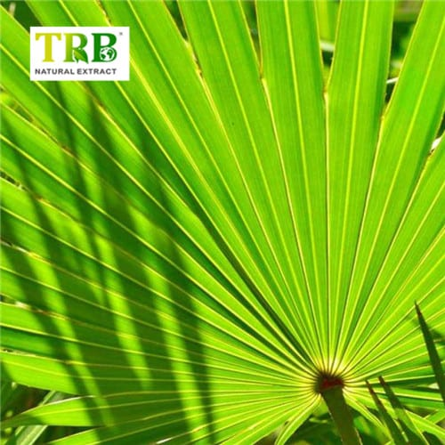 Cheapest Price Pyrroloquinoline Quinone Supplier - Saw Palmetto Extract – Tong Rui Bio Featured Image