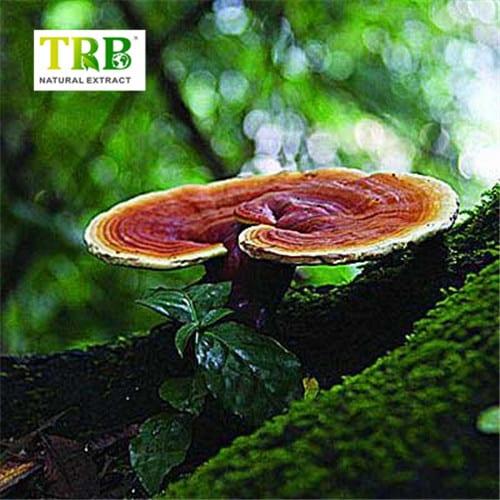 hot_sell_reishi_mushroom_extract_ganoderma_lucidum_extract_reishi_extract